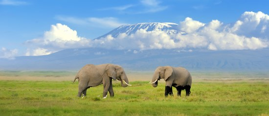 Trek to the top of Kilimanjaro for local East Anglia Charity